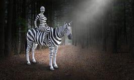 超现实的妇女骑马斑马,自然,森林 图库摄影