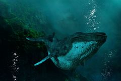 超现实的海里的驼背鲸,自然 向量例证