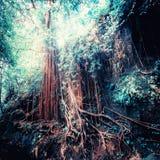 超现实的颜色的幻想热带密林森林 概念landsc 库存图片