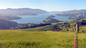 超级大Akaroa港口清早全景,新西兰 免版税图库摄影