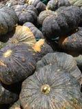超级市场路的南瓜植物在泰国 免版税库存照片