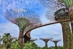 超级树树丛和蜻蜓桥梁 免版税图库摄影