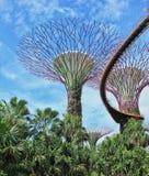 超级树树丛 库存照片