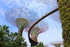 超级树树丛 库存图片