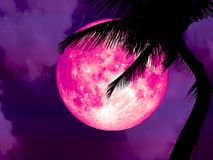 超级桃红色月亮后面剪影可可椰子树 免版税库存图片