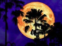 超级桃红色月亮后面剪影椰子树在庭院里 库存照片