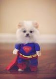 超级狗服装 免版税库存图片