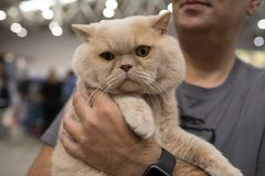 超级猫展示罗马2017年 免版税库存照片