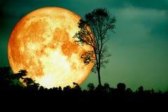 超级纯种月亮后面剪影分支树黑暗的森林gr 库存图片