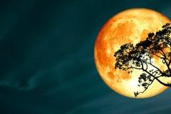 超级纯种月亮后面剪影树和五颜六色的天空 免版税图库摄影