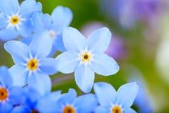 超级美好的蓝色花的宏指令 库存图片