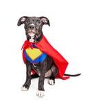 超级英雄小狗佩带的背心和海角 免版税图库摄影