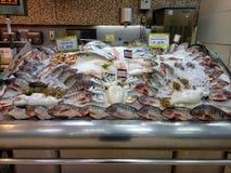 超级Bolty的鱼,战利品鱼和虾 免版税库存图片