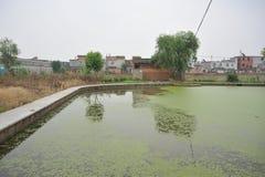 超营养作用污染的湖 免版税库存照片