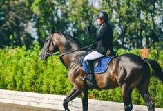 超越障碍马术比赛竞争、海湾马和车手在黑一致执行跳过辔 图库摄影