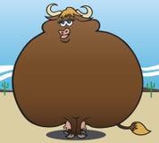 超重母牛 免版税库存照片