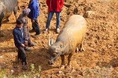 越南农场主销售和买水牛 库存图片