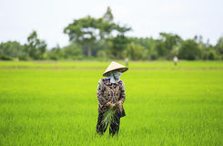 越南农夫 库存照片