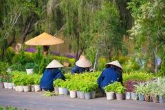 越南妇女工作在庭院里 免版税库存图片