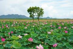 越南旅行,湄公河三角洲,荷花池 免版税图库摄影