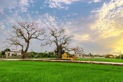 越南村庄典型的风景  免版税库存图片