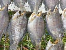 越南烹调:海鲜-干鱼 免版税库存照片