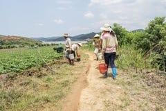 越南男人和妇女收获在领域的草莓 免版税库存照片