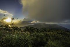 越南的雨林 免版税库存照片