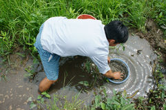 越南语,抓住鱼,泥,湄公河三角洲 库存照片