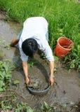 越南语,抓住鱼,泥,湄公河三角洲 免版税库存照片