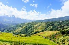 越南风景:在Mu Cang柴,安沛市,越南的米大阳台 库存照片