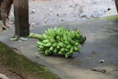 越南香蕉 库存照片