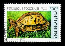 越南龟盒(Cuora galbinifrons), serie,大约1996年 免版税库存照片