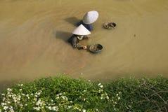 越南,捉住蜗牛的妇女 库存照片