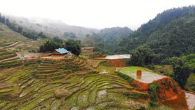 越南,沙坝镇,在雾的米领域 o 亚洲东南部美好的自然风景  影视素材