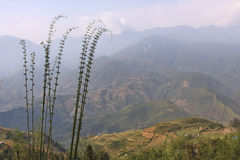 越南, Sa Pa 露台的域 库存照片