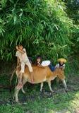 越南9月3日 免版税库存图片