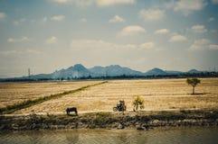 越南 图库摄影