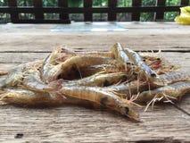 越南greasyback虾或沙子虾, Metapenaeus竹蛏 免版税库存照片