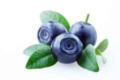越桔蓝莓查出的叶子 免版税库存照片