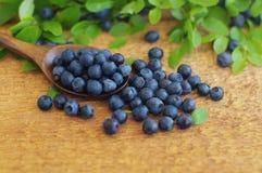 越桔水多的成熟莓果在一把木匙子 免版税库存图片