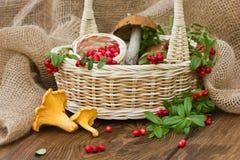 越橘和蘑菇在篮子 森林莓果和蘑菇的美好的构成 库存图片