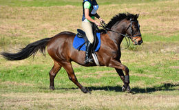 越野马骑术 库存照片