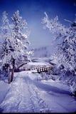 越野滑雪在黄石 免版税库存照片