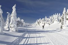 越野滑雪足迹 免版税库存照片