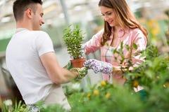 趋向一棵植物的工作者夫妇自温室 免版税库存图片