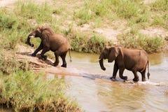 趟过非洲大象的河二 库存照片