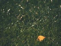 足球绿色 橄榄球季节的结尾 烘干在塑料橄榄球草皮地面下落的叶子  免版税库存图片