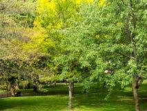 足球高在天空中在公园有不同的色的树背景  库存图片