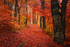 足迹低谷有雾的秋天森林 免版税库存图片
